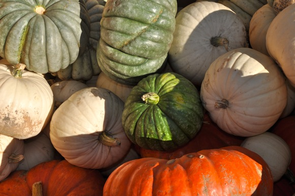 heirloom pumpkins at Draeger's
