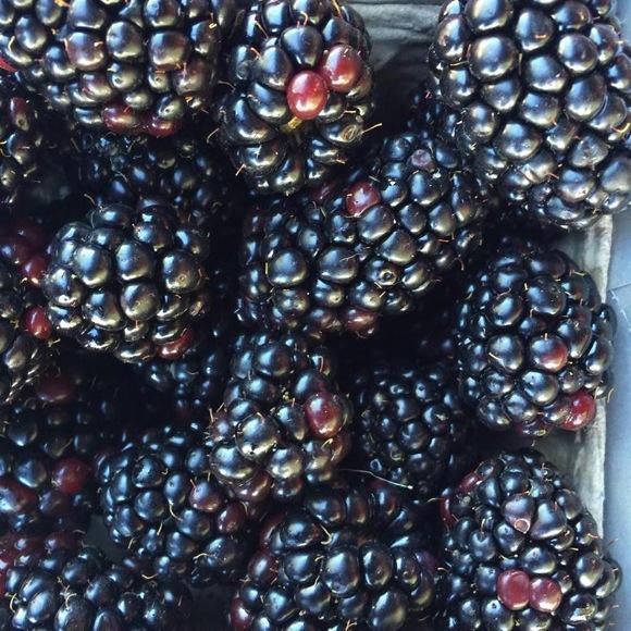 berries_Mitchell Johnson