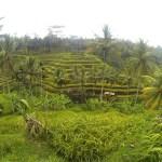 guided tour bali rice paddies