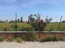 Bologna suburb