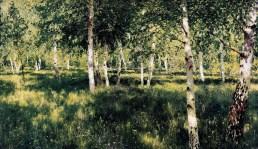 Birch Grove 1888