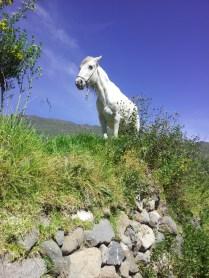 Koń, jaki jest, każdy widzi
