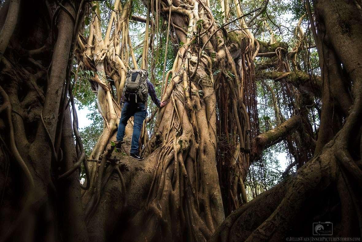 Jungle Tree - Take Professional Travel Photos
