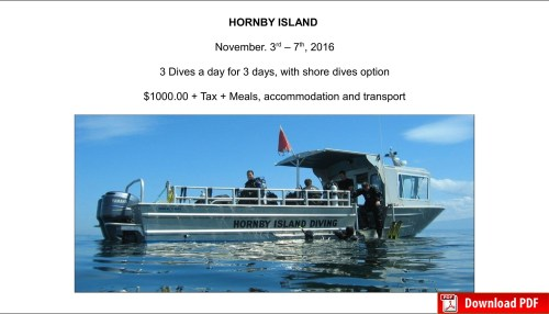hornbyislanddive