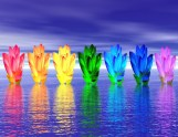 Chakra colors of lily flower upon water in blue night background