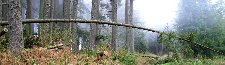 2006, Brownsmead, Oregon