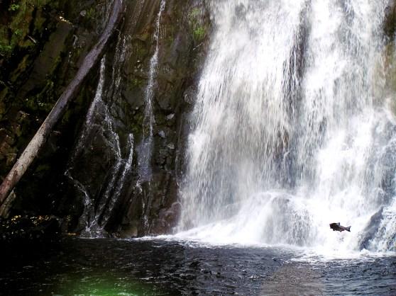 2012, Youngs River Falls, Oregon.