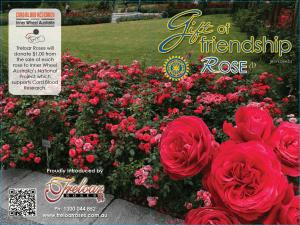 Gift of Friendship rose