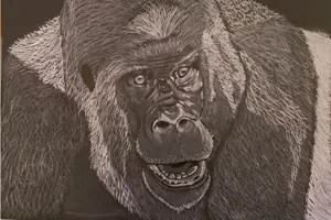 Gorilla drawing