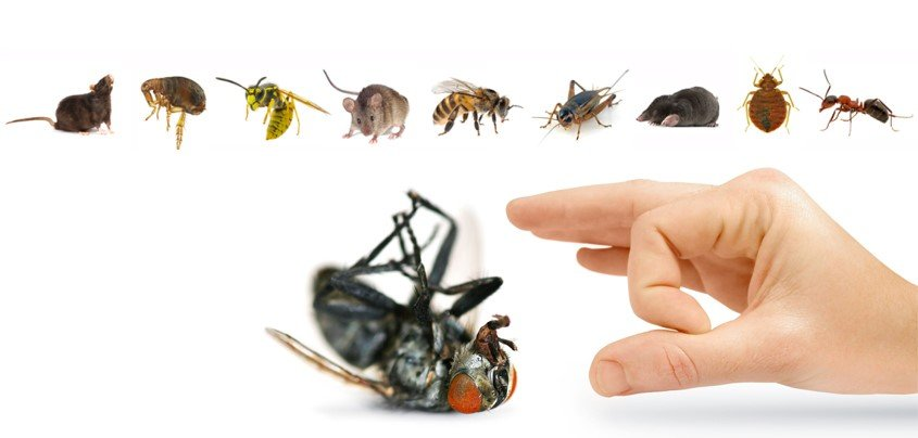 Arimos Pest Control Ltd