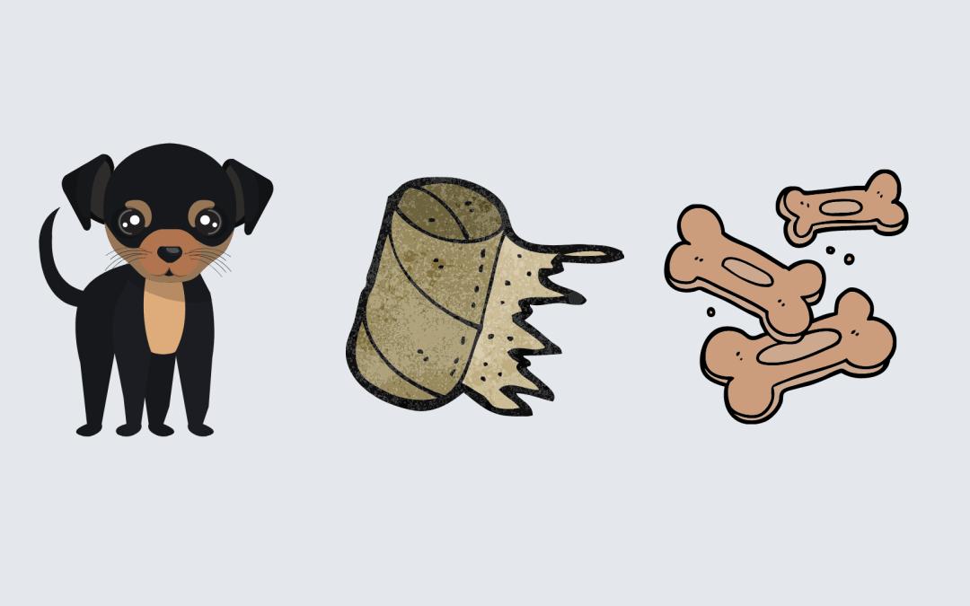 Tips til å aktivisere hunden din