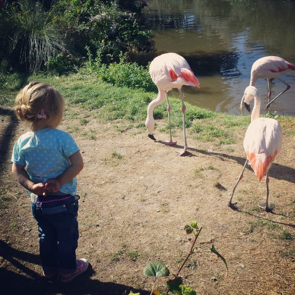 Addison and the flamingos