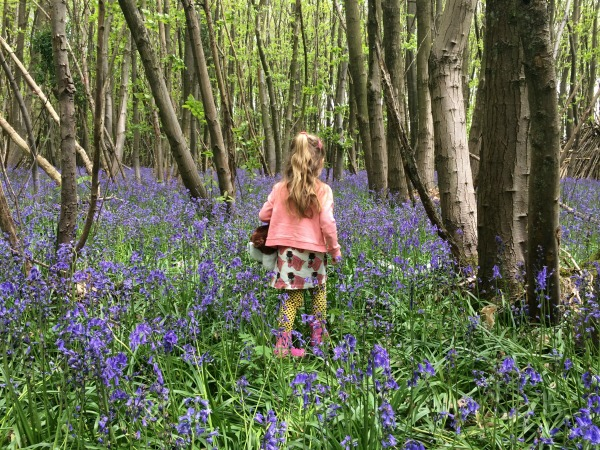 Walking in the Bluebells