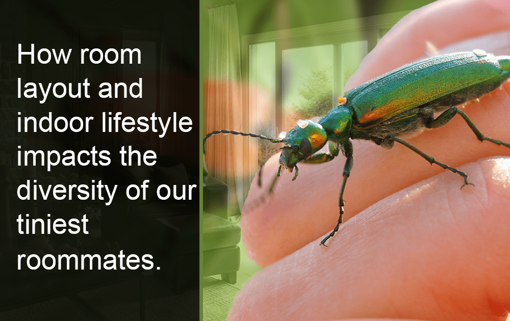 Indoor lifestyle impacts the diversity of bugs