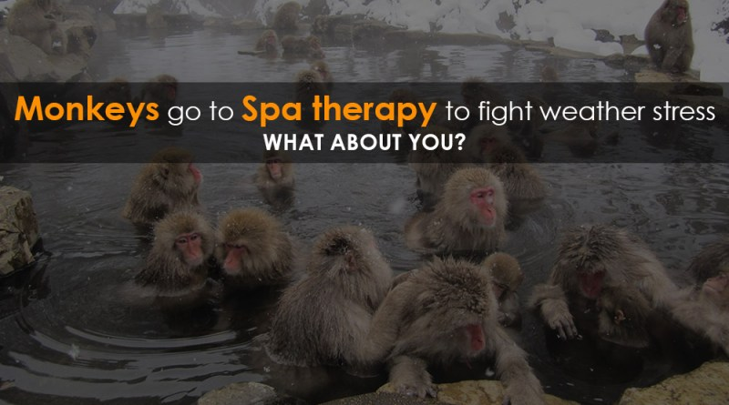 Monkey-go-for-spa-therapy-in-Jigokudani-Monkey-Park-in-Nagano