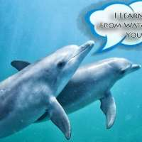 Pass That Pufferfish: How Dolphins Get High