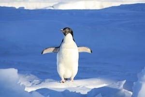 Giant Prehistoric Penguin