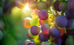 Plasma Flares & the Science of Microwaving Grapes