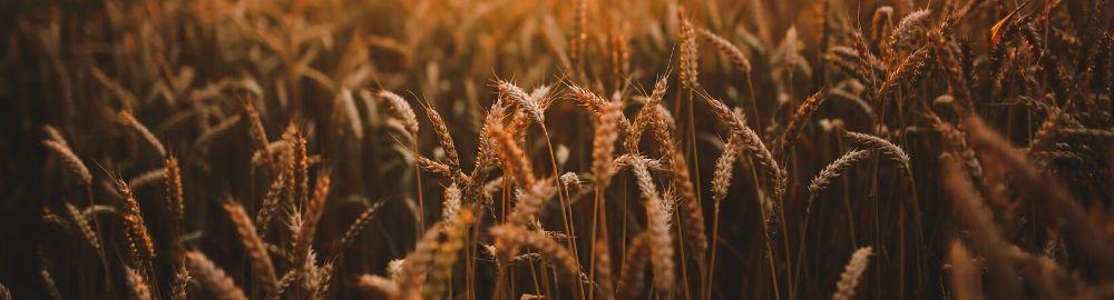 sector-agrario