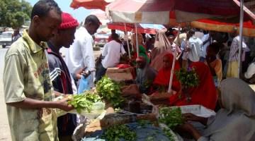 Traders sample khat, a narcotic leaf