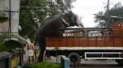 Elephant getting out of the truck