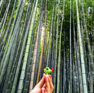 Loki at Bamboo Forest