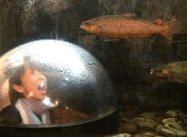 LL Bean Fish