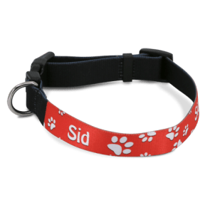 Dog Collar (Medium)