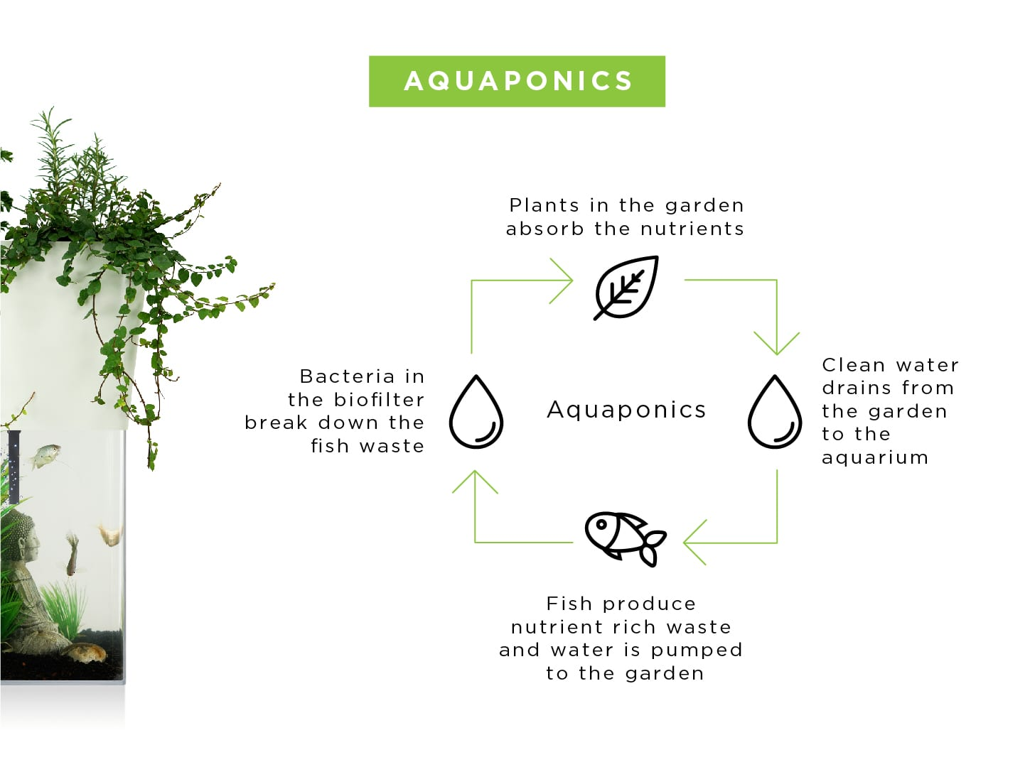 Just Learn Aquaponic cycle