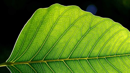 Artificial Leaf Design