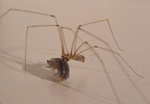 Spiders Enlisted in Fight Against Woodworms: Could They Also Help Control Malaria?