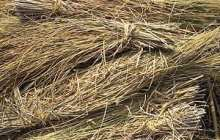 Can Straw Provide China's Energy Needs?