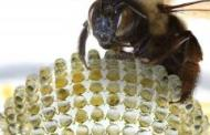 Insect eye-inspired camera captures wide field of view with no distortion
