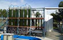 UA researchers design a photobioreactor to produce biofuel from algae