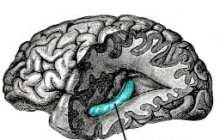 Brain rewires itself after damage or injury, life scientists discover