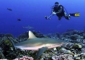 diver-photo1-284x202