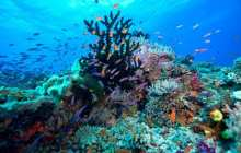 'Street-view' comes to the world's coral reefs