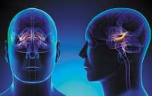 Small brain biopsies can be used to grow large numbers of patient's own brain cells