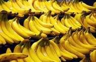 Panama disease spreads among bananas again