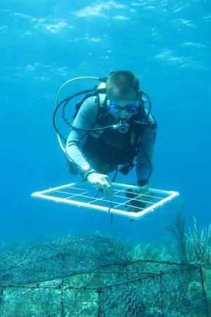 coral_diver_2