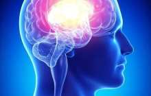 Penn Study Treats Alzheimer's by Delivering Protein Across Blood-Brain Barrier