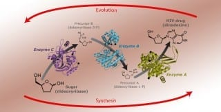 Jenny Ohnstad & Brian Bachmann / Vanderbilt University Illustration of the pathway determined by bioretrosynthesis for making an HIV drug out of a simple sugar.