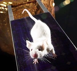 Mouse. (Photo credit: Wikipedia)