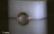 Elastic Invisibility Cloak Allows to Hide from Touching