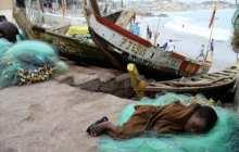 Global wildlife decline driving slave labor, organized crime