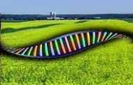 Coming soon: Genetically edited fruit?