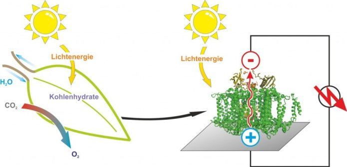 While leaves turn the energy of the sunlight for the conversion of carbon dioxide to biomass, photovoltaic devices harness the light to produce electricity. © Nicolas Plumeré