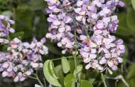 Seeding plant diversity for future generations
