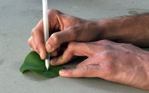 Researchers drew sensors capable of detecting pollutants on a leaf. via UC San Diego
