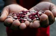 Bean breakthrough bodes well for climate change challenge